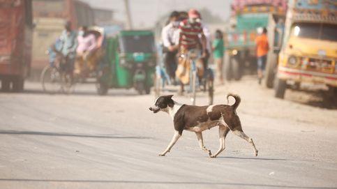 Una mujer china tiene más de 1.300 perros callejeros acogidos en su casa
