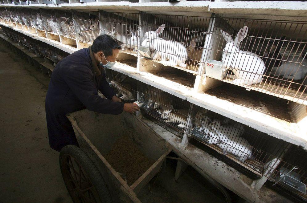 Foto: Una granja de conejos. (EFE)