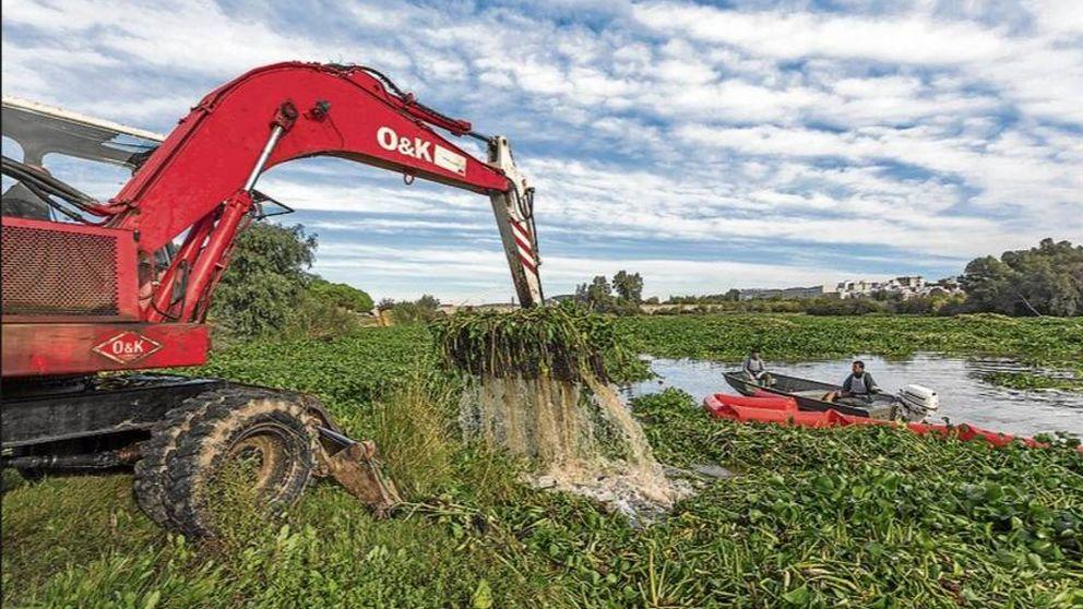 Réquiem por un río: la plaga que asfixia el Guadiana y alarma a Extremadura