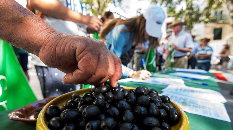 Foto: Aceitunas negras en una acción de protesta de los agricultores españoles. (EFE)