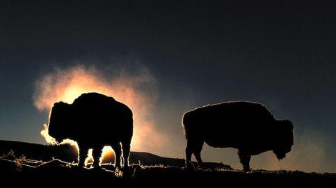 Los animales y plantas que han desaparecido en 2020