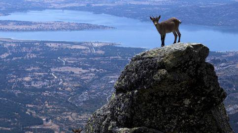 Locuras en el monte: tenemos que hablar de la sierra de Madrid