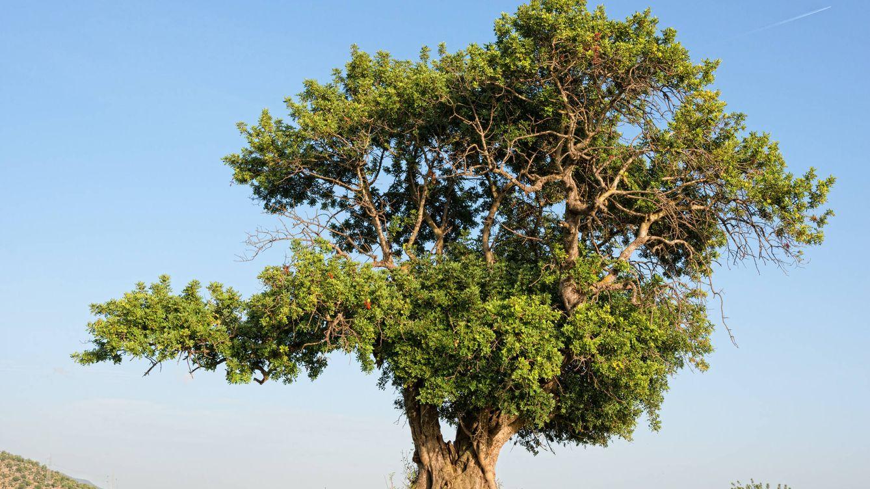 ¿Tiene sentido invertir en fondos sostenibles?