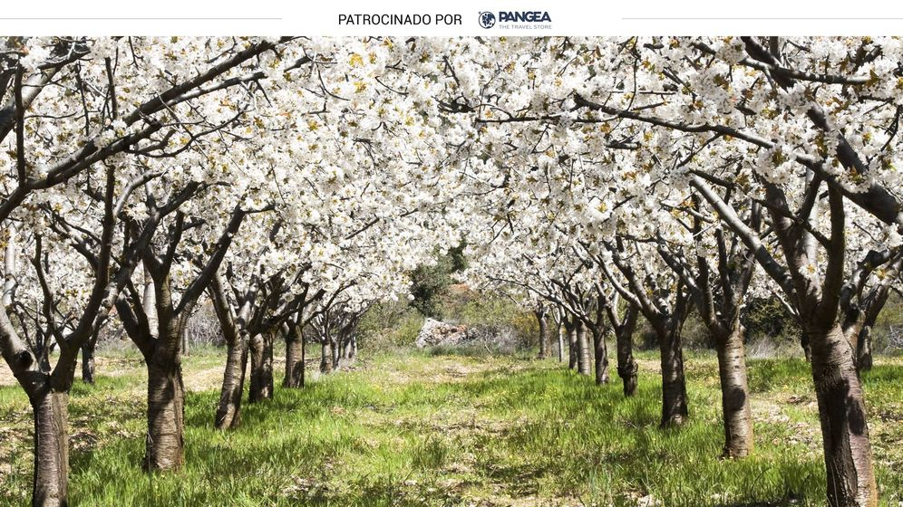 Foto: Valle del Jerte con los cerezos en flor (iStock)