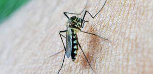 Post de ¿Te acribillan los mosquitos en verano? 7 trucos para evitar sus picaduras