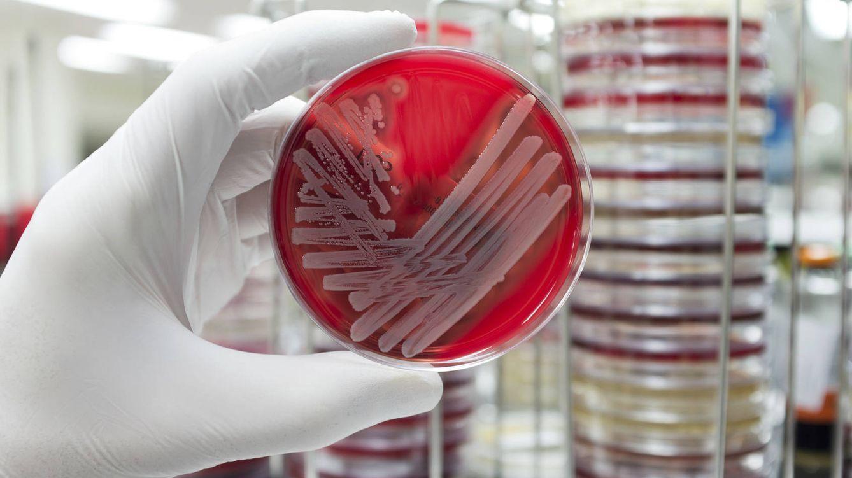Foto: Lo advirtió Fleming, descubridor de la penicilina, hace 70 años, pero la potenciales consecuencias no han quedado claras hasta hace muy poco. (iStock)