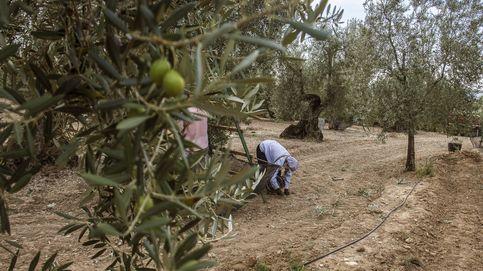 El verdeo arranca con los productores en vilo por la demanda 'antidumping'