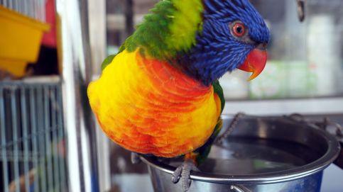 La gripe aviar se extiende en Taiwán