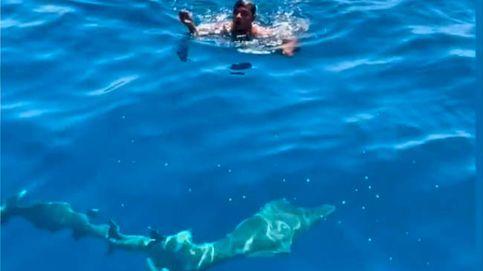 Un trabajador se lanza al agua entre tiburones para salvar a un pájaro