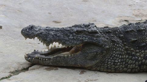 Australia, el lugar donde puedes encontrar cocodrilos en la carretera