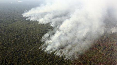 48.000 hospitalizaciones: el coste de la contaminación de los incendios forestales en Brasil