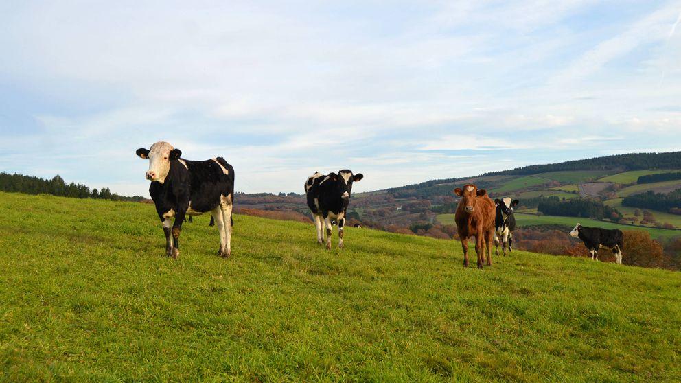No hay vacas para tanto hípster