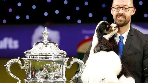 El festival canino de Crufts (Birmingham) reivindica las razas británicas