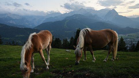 El misterio de los caballos mutilados y asesinados en Francia