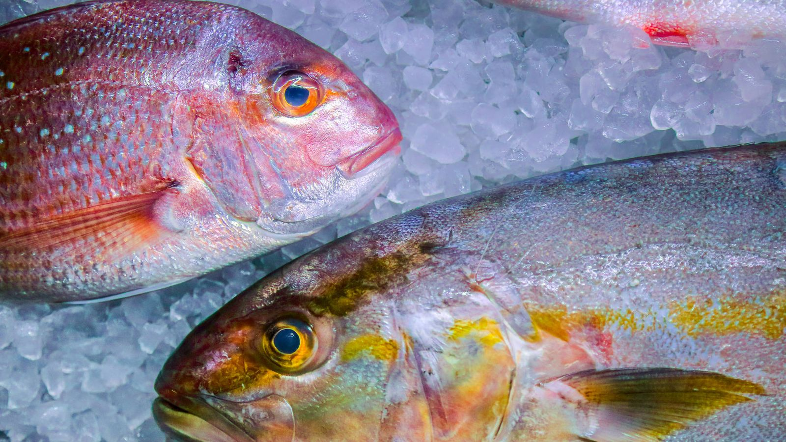 Foto: Pescado fresco. (iStock)