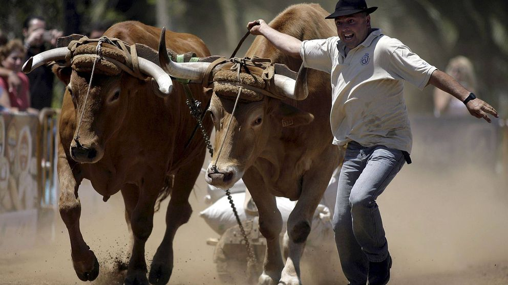 Acción Natural Ibérica, el partido de 'los otros' amantes del campo