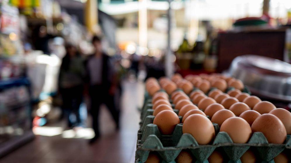 Foto: La salmonela se encuentra en la cáscara del huevo.