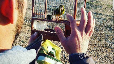 Madrid cierra las jaulas y veta todos los permisos para capturar aves cantoras