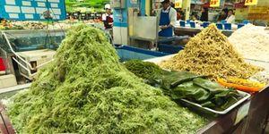 Foto: Una alternativa a los lácteos: las cinco propiedades desconocidas de las algas