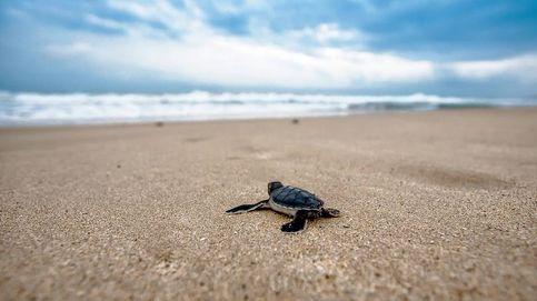 Una mujer es atendida en Tenerife tras encontrar una tortuga muerta en su vagina