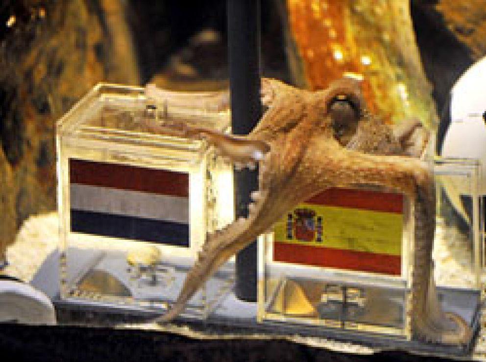 Foto: El pulpo Paul, el adivino del Mundial 2010, fallece en Oberhausen
