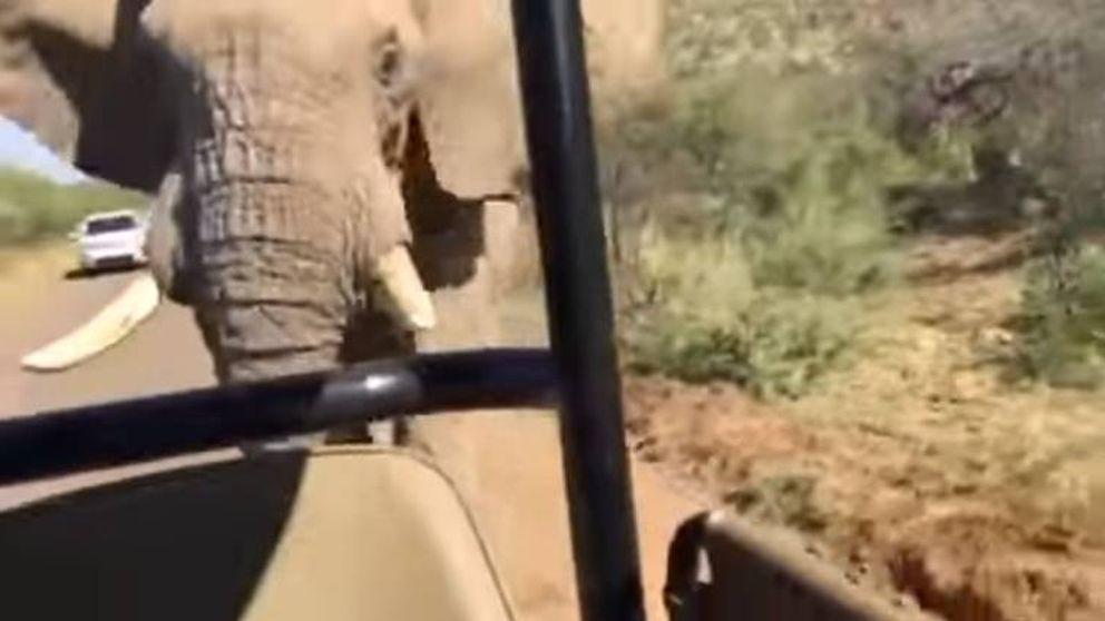 El encontronazo de Arnold Schwarzenegger con un elefante