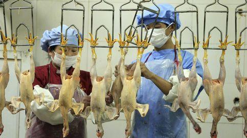 El otro fraude que contamina la industria de la carne (al margen del maltrato animal)