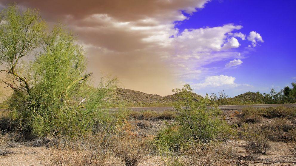 La fiebre del valle: una epidemia silenciosa que se expande en EEUU