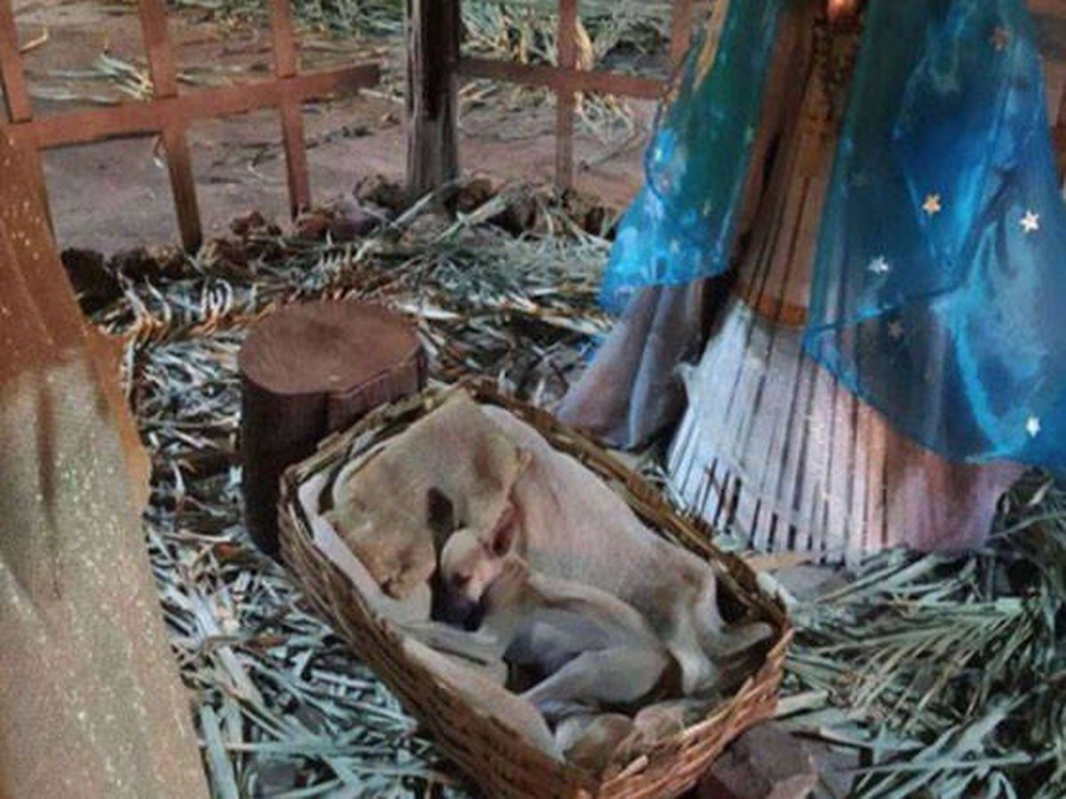 Foto: El perro  dormía plácidamente en la cuna del niño Jesús (Foto: Facebook)