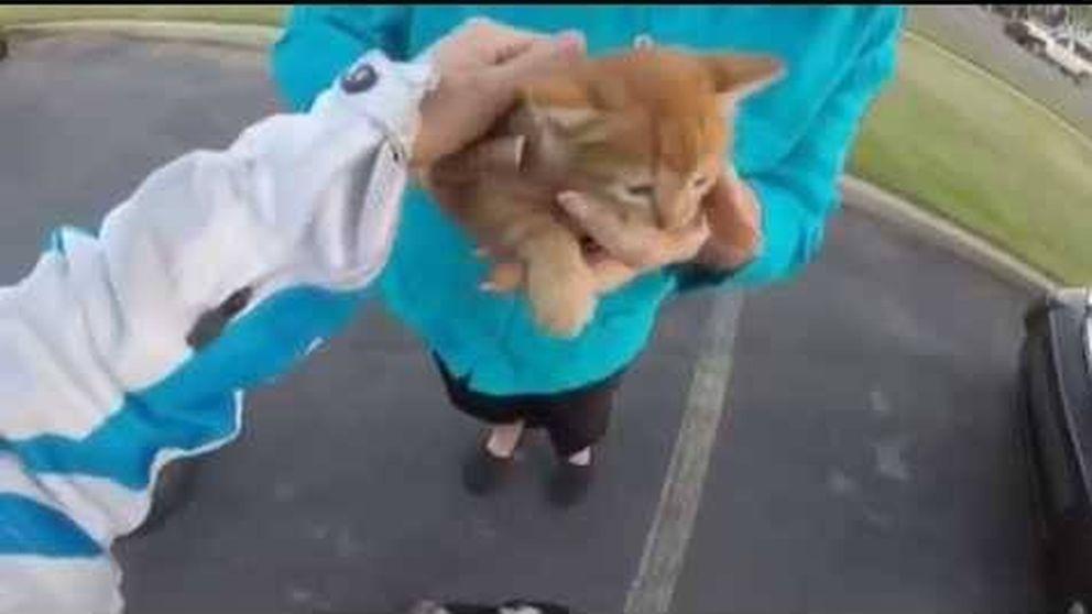 Una motociclista salva a un gatito parando el tráfico - 09/11/15