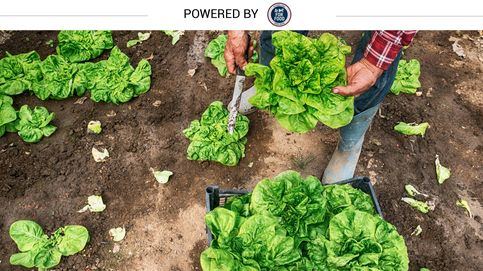La verdura de hoja, de la huerta a tu plato en solo 48 horas