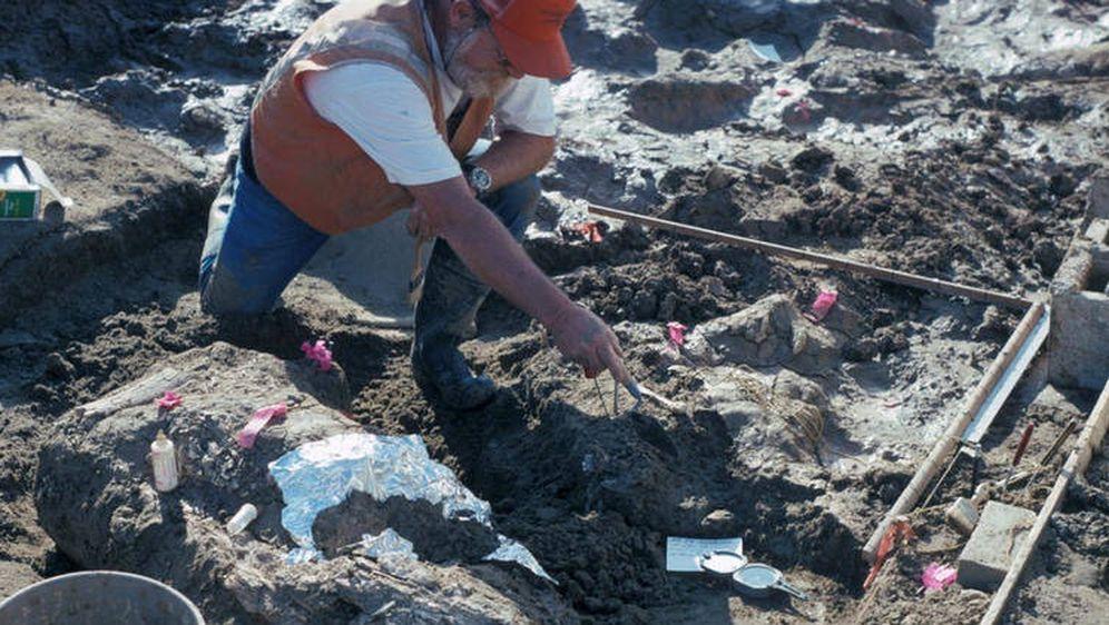 Foto: Imagen del yacimiento donde se produjo el descubrimiento. (Museo de Historia Natural de San Diego)