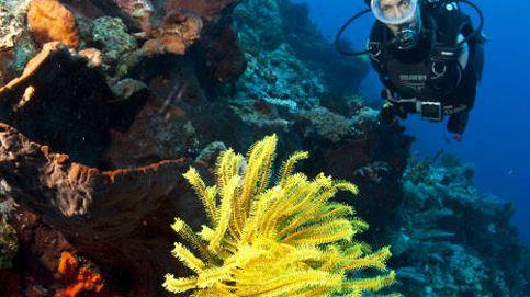 ¿Buscas a Dory? Descubre los cinco paraísos del submarinismo en España