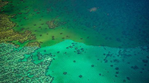 Más alto que el Empire State y de 1,5 km de ancho: el nuevo coral en la Gran Barrera