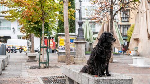 Madrid ya tiene más perros y gatos registrados que niños menores de 10 años