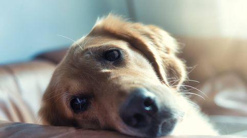 La perra 'más desafortunada': regresa al refugio en el que fue adoptada hace 14 años