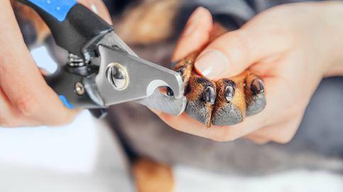 El vídeo viral con el que aprenderás a cortar las uñas a tu perro sin riesgos