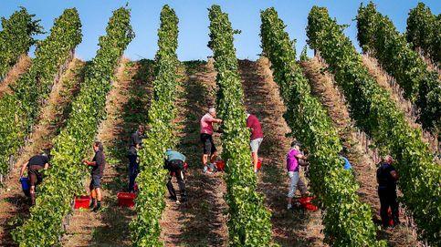 Una millonaria carambola geopolítica para entender el drama del vino español en China