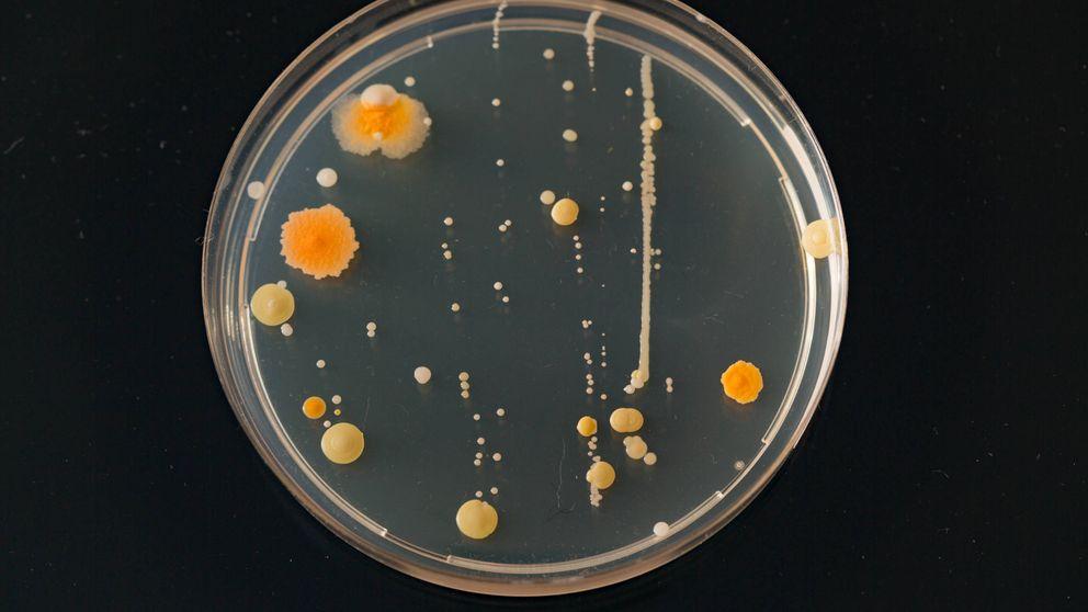 La microbiota puede luchar contra las infecciones cerebrales