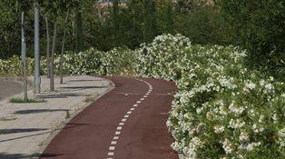 Necesitamos concienciación y respeto mutuo entre conductores, ciclistas y peatones