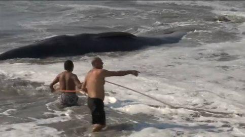 Vecinos y turistas logran salvar a una ballena en una playa de México