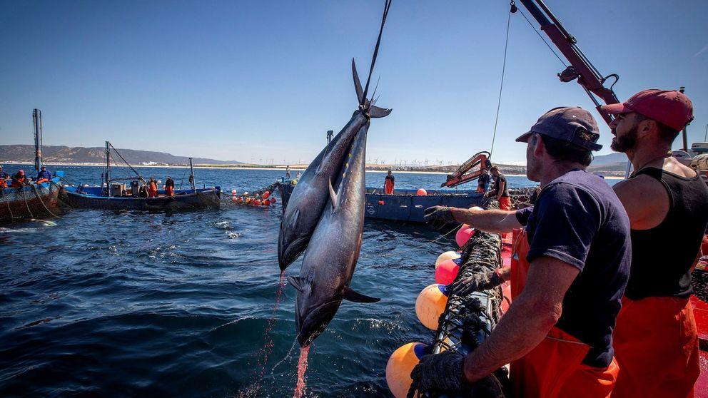 Más mercurio en el atún rojo, el último disparate del cambio climático