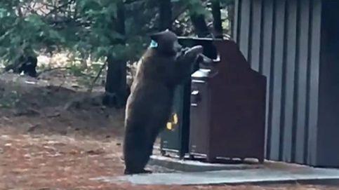 Alerta en el parque de Yosemite por la presencia del oso negro