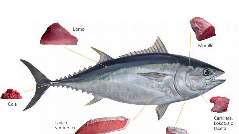 Ilustración de algunas partes comestibles del atún rojo del Atlántico. (G. Balfegó)