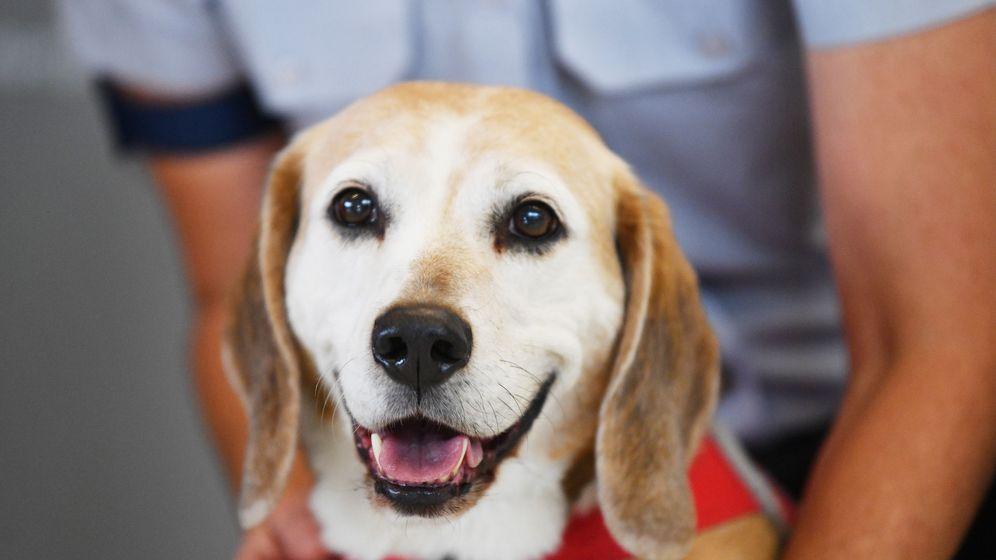 Foto: Nuestras mascotas caninas son más mayores de lo que pensábamos. Foto:EFE David Mariuz