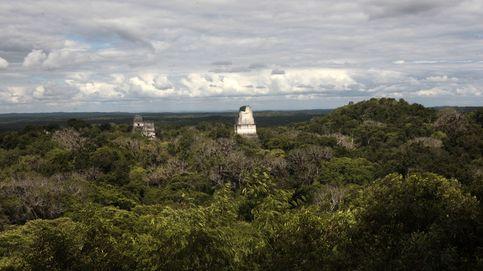 El gran incendio blanco: cómo la cocaína está destruyendo las junglas centroamericanas