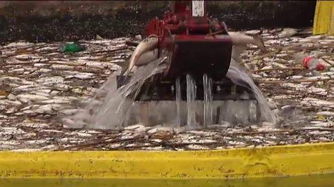 Aparecen miles de peces muertos en una depuradora de Valencia