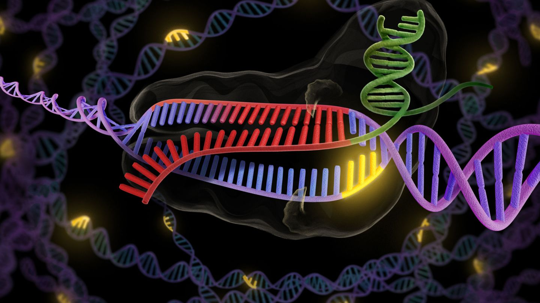 La enzima CRISPR en verde y rojo se une a una hebra doble de ADN en púrpura.