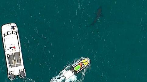 Un tiburón blanco de tres metros de longitud mata a un surfista en Australia