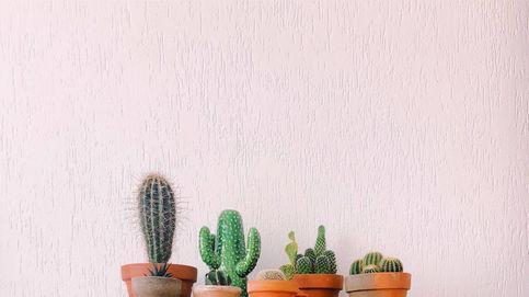 El frío no será problema para estas 5 plantas de interior que decoran y dan vida a cualquier estancia